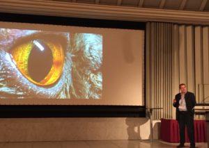 Neues aus der Ophthalmologie der Katze von Prof. Dr. Christine Heinrich aus GB