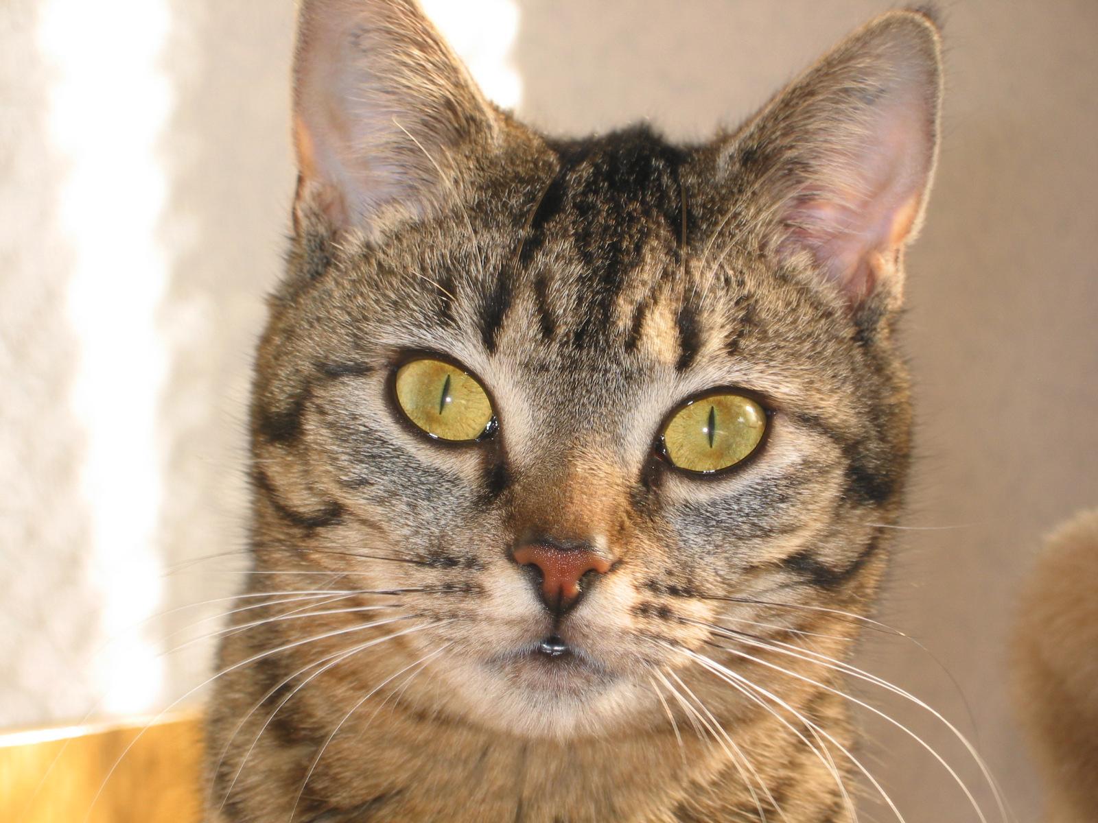 das leben mit einer katze nach amputation einer gliedmasse deutsche gruppe katzenmedizin